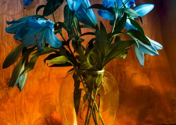 Vase of blue lilies.