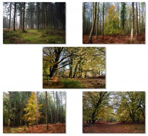 Pack of 5 woodland cards, showing UK woods and forests.