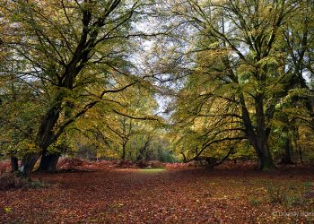 Autumn colours in the New Forest, Hampshire.