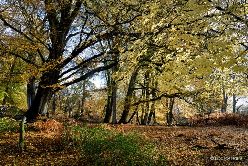 Sunshine and leaves in the New Forest - autumn colours.