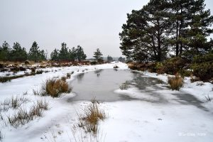 Snow and ice at Morden Bog, Wareham Forest.