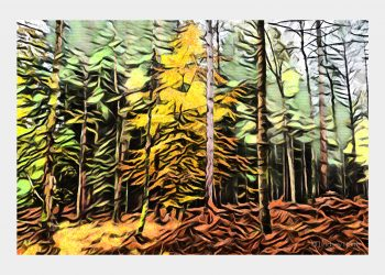 Autumn New Forest - greetings card by Lindsey Harris.