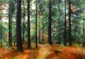 Autumn at Bolderwood, New Forest, UK. Art greetings card by Lindsey Harris.