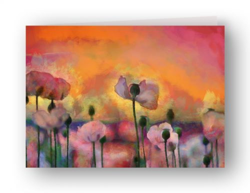 Greetings card: Dorset pink poppies at sunrise.
