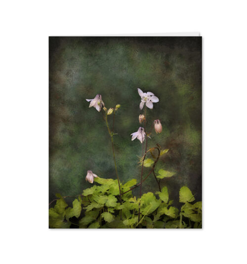 Columbine flower card (Aquilegia vulgaris) – blank greetings card.